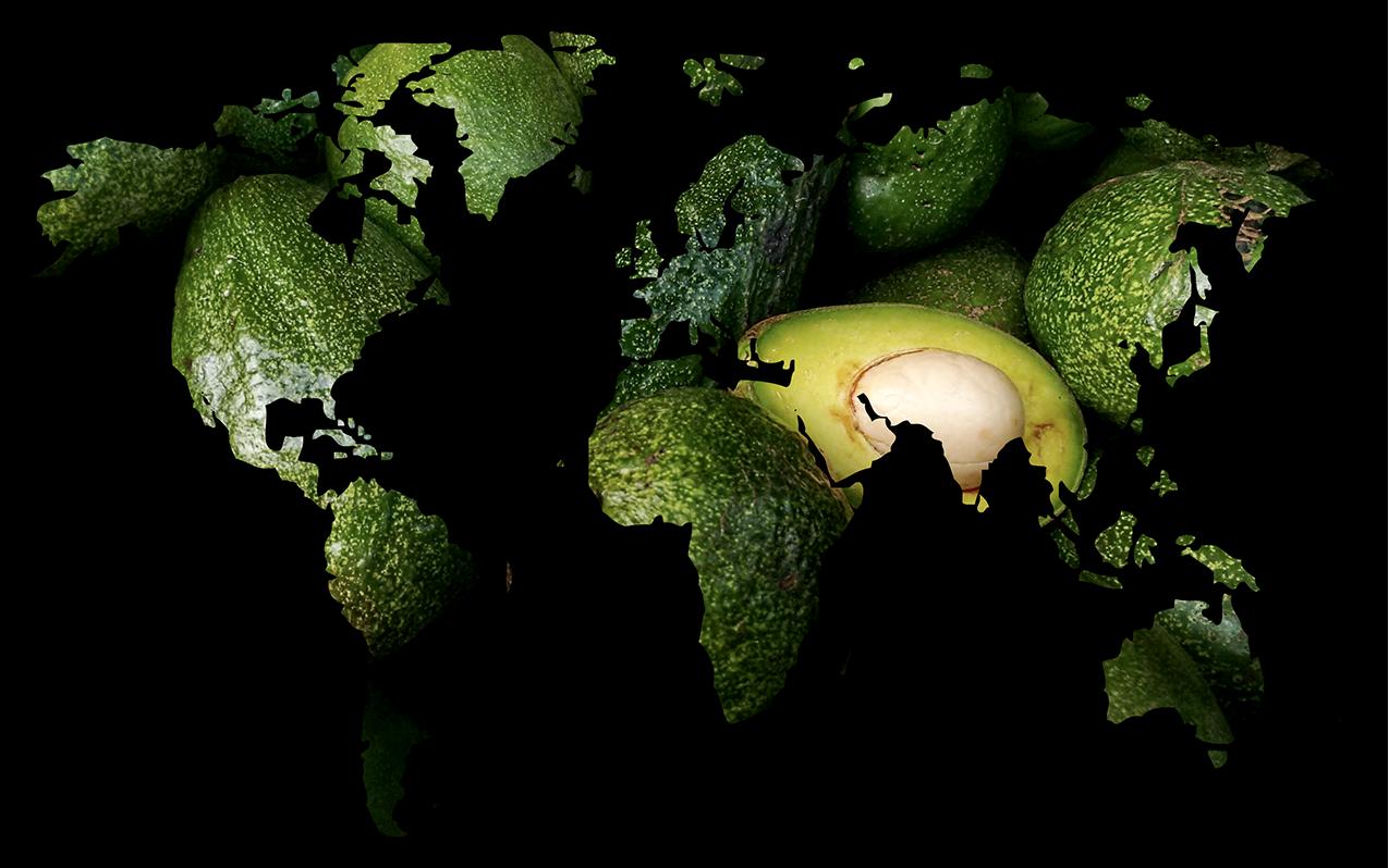 Aguacate mapa